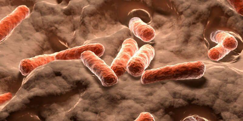 bacterias efecto rebote