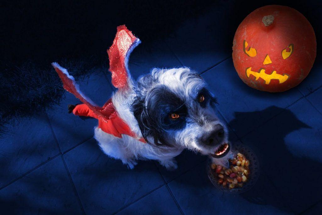 halloween perro www.tucaminodelbienestar.com