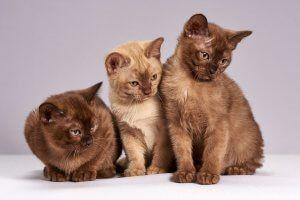 beneficios de tener un gato 1 www.tucaminodelbienestar.com
