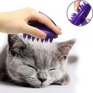 cepillo gatos 2 adoptar un gato www.tucaminodelbienestar.com