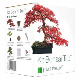 kit bonsai www.tucaminodelbienestar.com